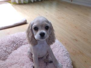 A little cutie