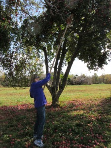 Jennifer picking apples_2
